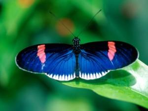 butterflies9